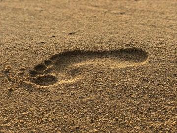 El secreto del paso erguido esta en los arcos del pie humano