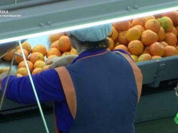 Del campo al consumidor: el camino de las naranjas hasta llegar a un supermercado