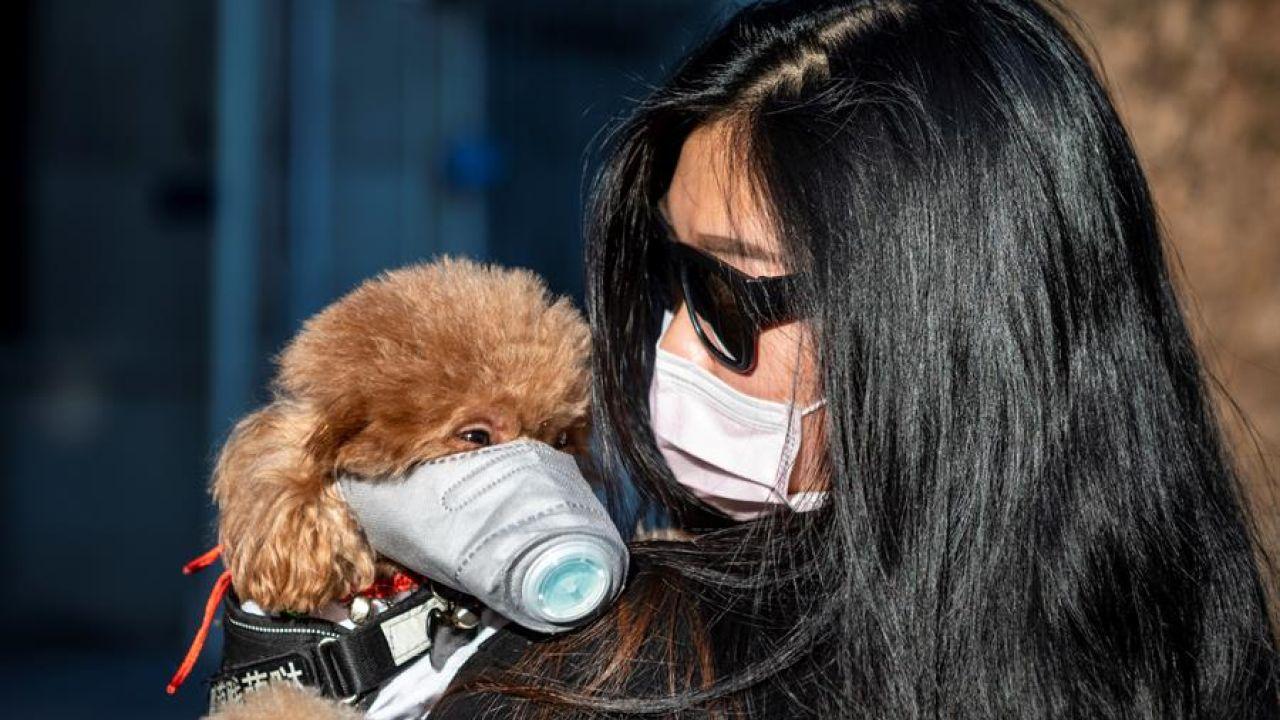 Una mujer pasea a su perro con mascarilla en Guangzhou (China)