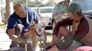 Kwane Stewart, el veterinario callejero, atiende a un perro