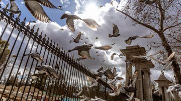 Varias palomas alzan el vuelo sobre la valla del parque del Retiro