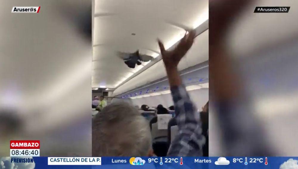 Unos pasajeros se quedan atónitos al ver cómo dos palomas se cuelan en el interior de su avión