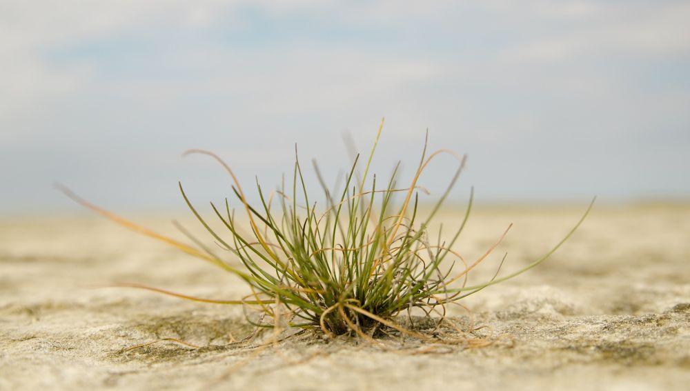 Como se adaptan las plantas a condiciones de cambio climatico