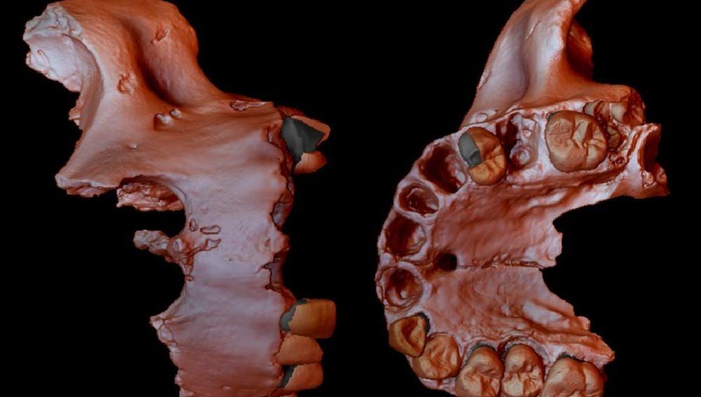 Obtienen la evidencia genetica humana mas antigua hasta la fecha