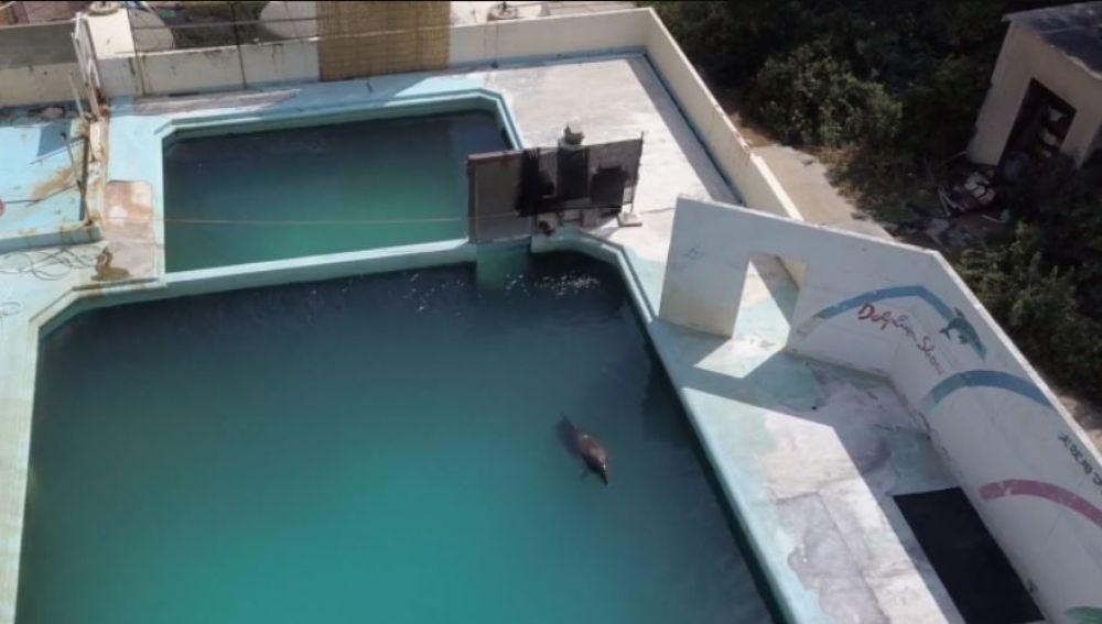 En completa soledad, muere delfín en estanque de acuario abandonado