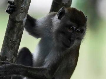 Un macaco, en una imagen de archivo
