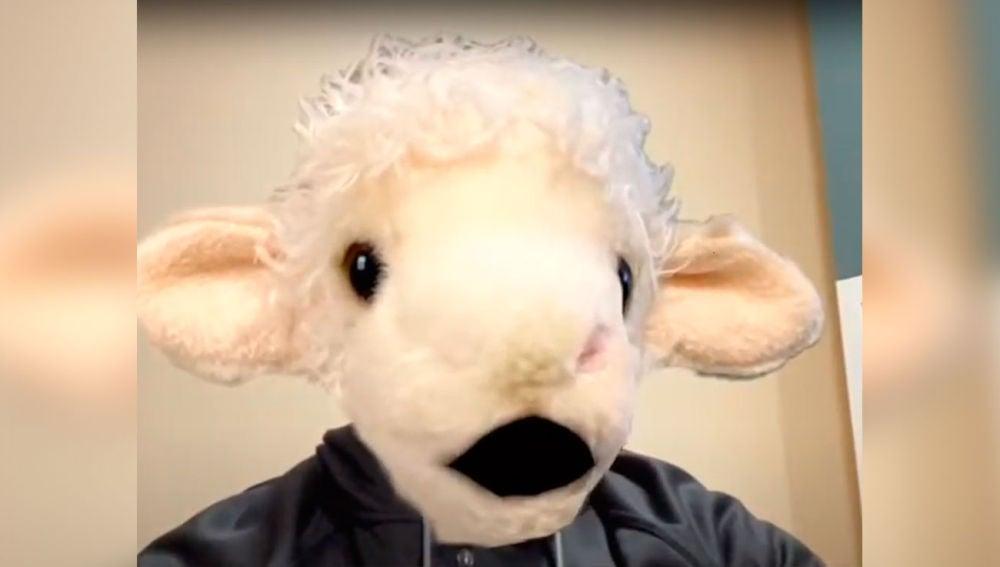 Con cara de oveja