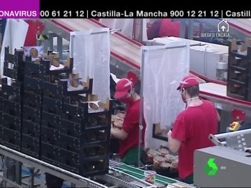 La cooperativa de tomates  'Granada la palma' extrema las precauciones