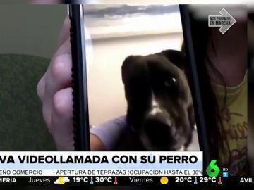 El llanto de un perro al hacer videollamada con su dueña, enfermera que lucha contra el coronavirus