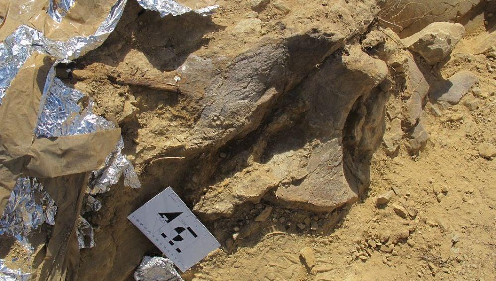 Descubierto un nuevo dinosaurio turiasaurio en Teruel