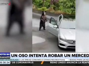 El sorprendente vídeo que muestra las habilidades de un oso para robar un Mercedes