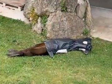 Imagen del león marino fallecido en el zoo de la Magdalena