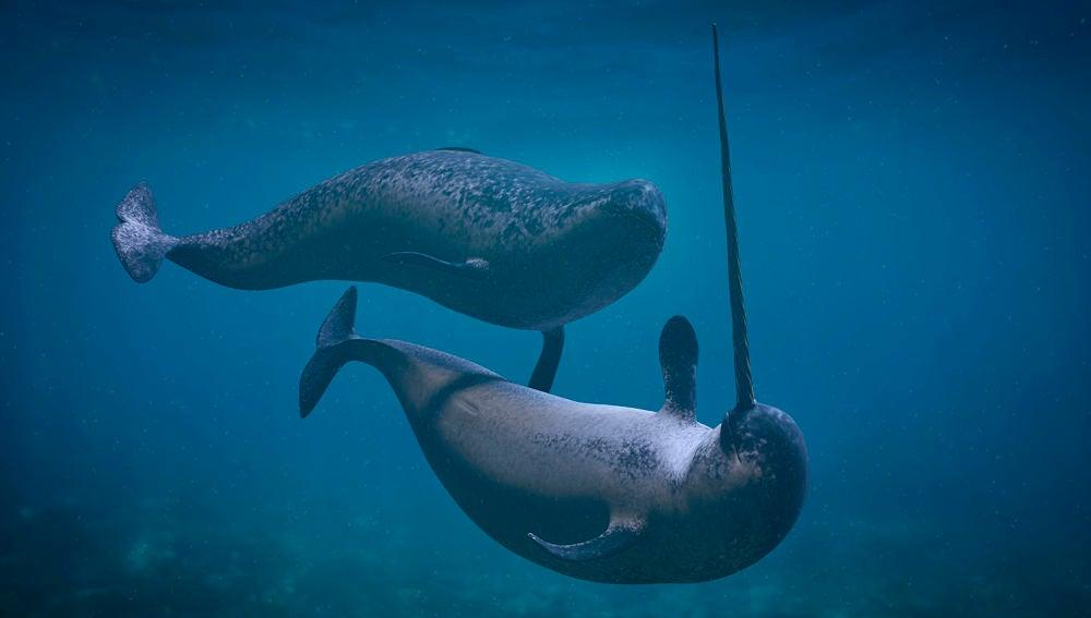 Capturados los extranos sonidos de los unicornios del mar