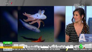 Encuentran a un pulpo 'Dumbo' a 7.000 metros de profundidad, el récord mundial para su especie