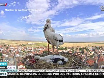 La emoción de Aruser@s tras apadrinar a Luna y Eros, dos cigüeñas del Madrigal de las Altas Torres