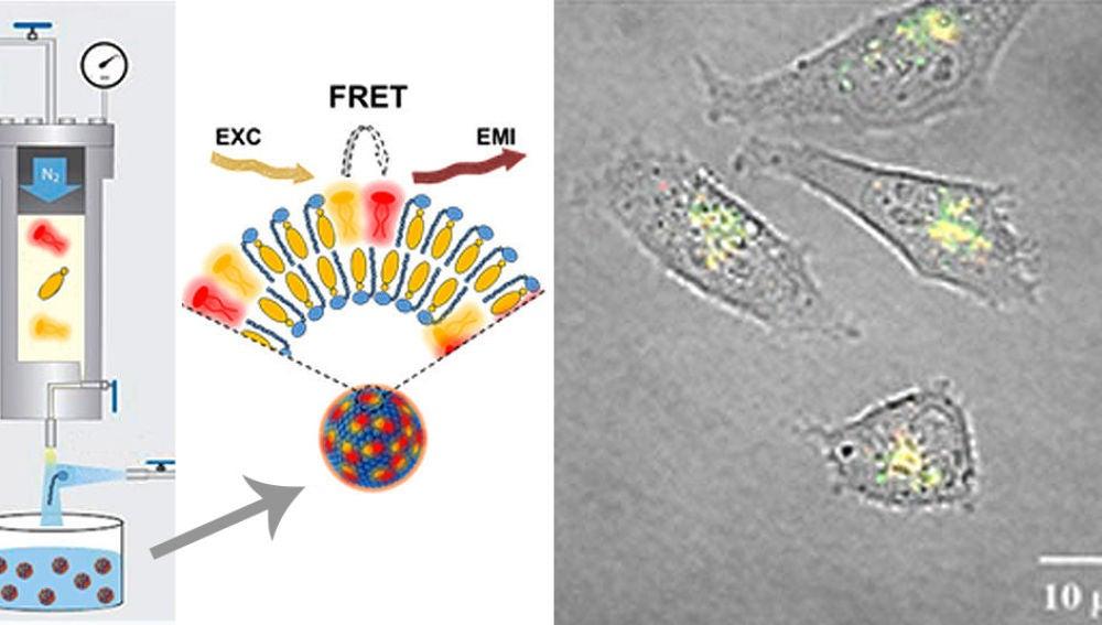 Nuevas nanoparticulas fluorescentes para ver el interior celular