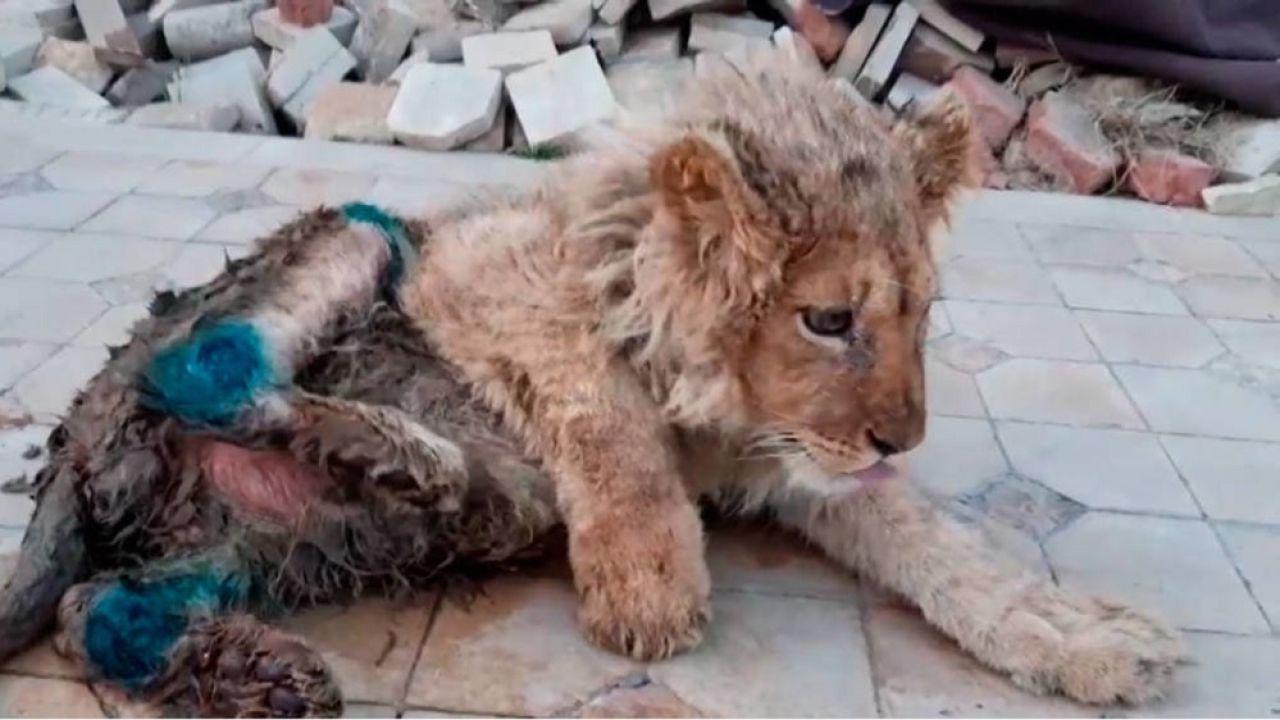 Imagen del cachorro que fue rescatado después de que le rompiesen las patas