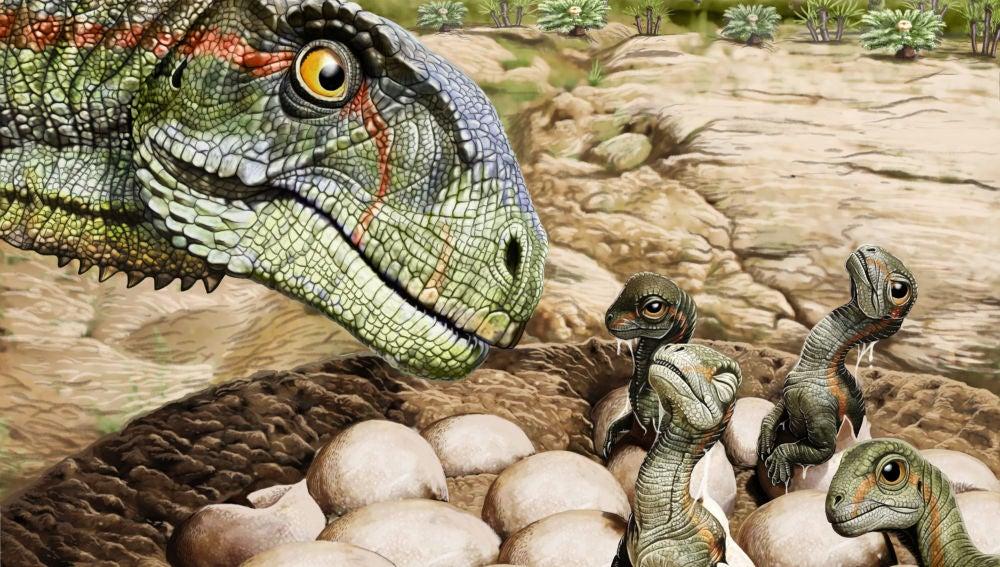 Blandos o duros El enigma de los huevos de dinosaurios