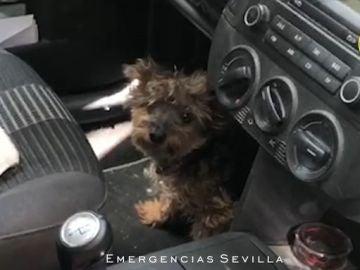 El perro estaba prácticamente desvanecido cuando fue rescatado en Sevilla