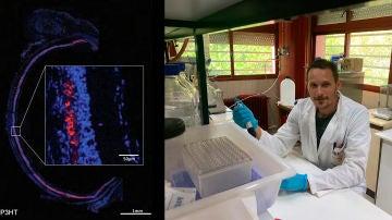 Ratas ciegas recuperan la vista durante ocho meses con la ayuda de nanoparticulas