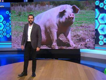 """La nueva gripe porcina que podría desencadenar en otra pandemia 'asusta' a Dani Mateo: """"¡No hombre, los cerdos no!"""""""