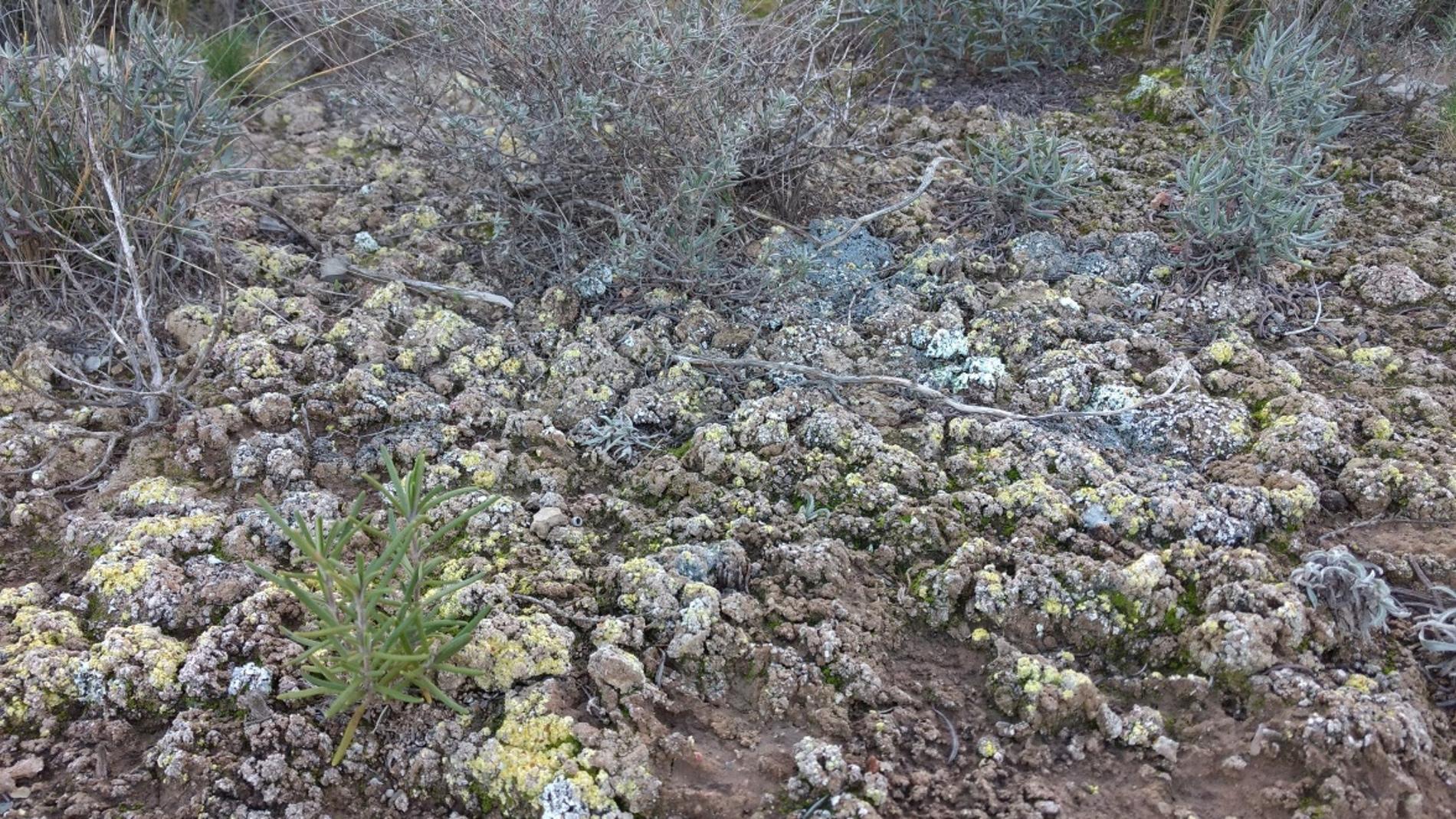 Costras biológicas del suelo
