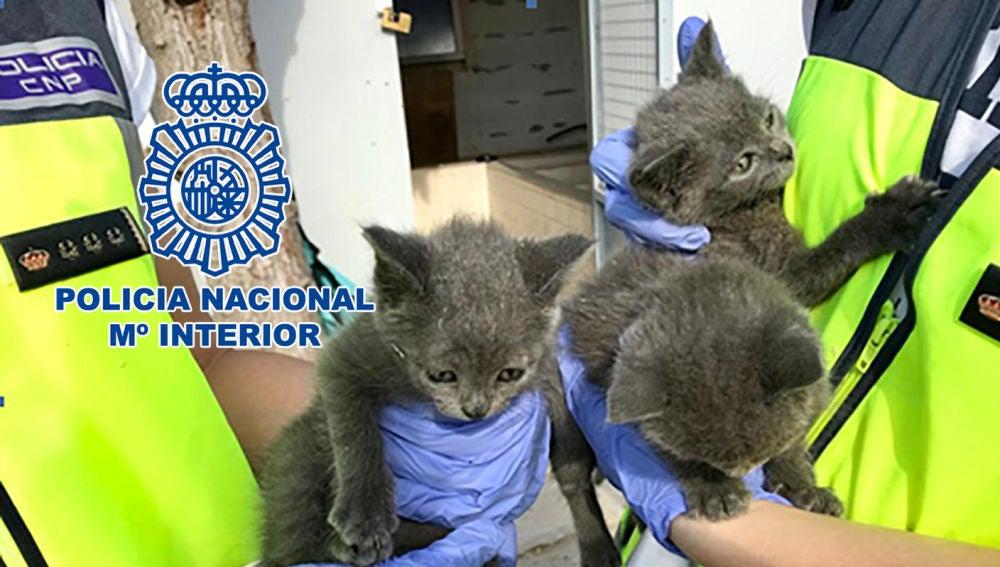 Imagen de los gatos rescatados del criadero ilegal de mascotas