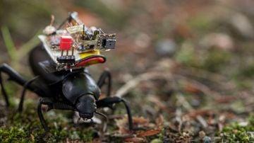Escarabajo con cámara
