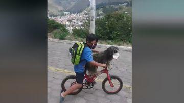 En vídeo se observa cómo el pequeño le pone a su perro una mascarilla