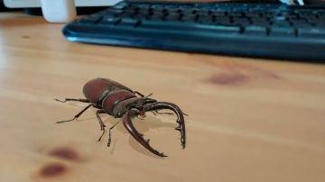 Lucanidae en realidad aumentada