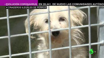 """Protectoras piden no comprar animales: """"Adóptalos, tras el perro con el lacito hay una crueldad salvaje"""""""