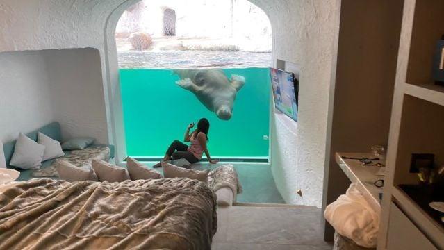 Room Walurus. Pairi Daiza Resort