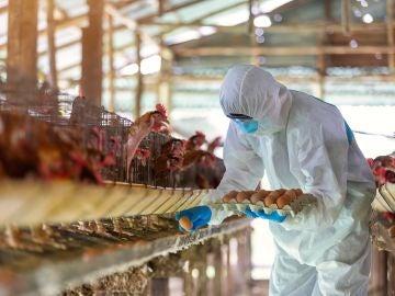 La pandemia de COVID 19 amenaza la seguridad alimentaria global