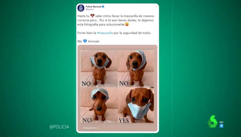 La tierna fotografía de un perro con la que la Policía Nacional te explica cómo ponerte bien la mascarilla