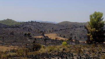 El incendio forestal que se ha declarado en Férez (Albacete)