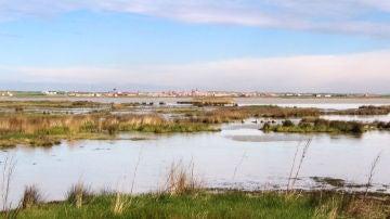 Reserva Natural 'Las Lagunas de Villafáfila', Zamora