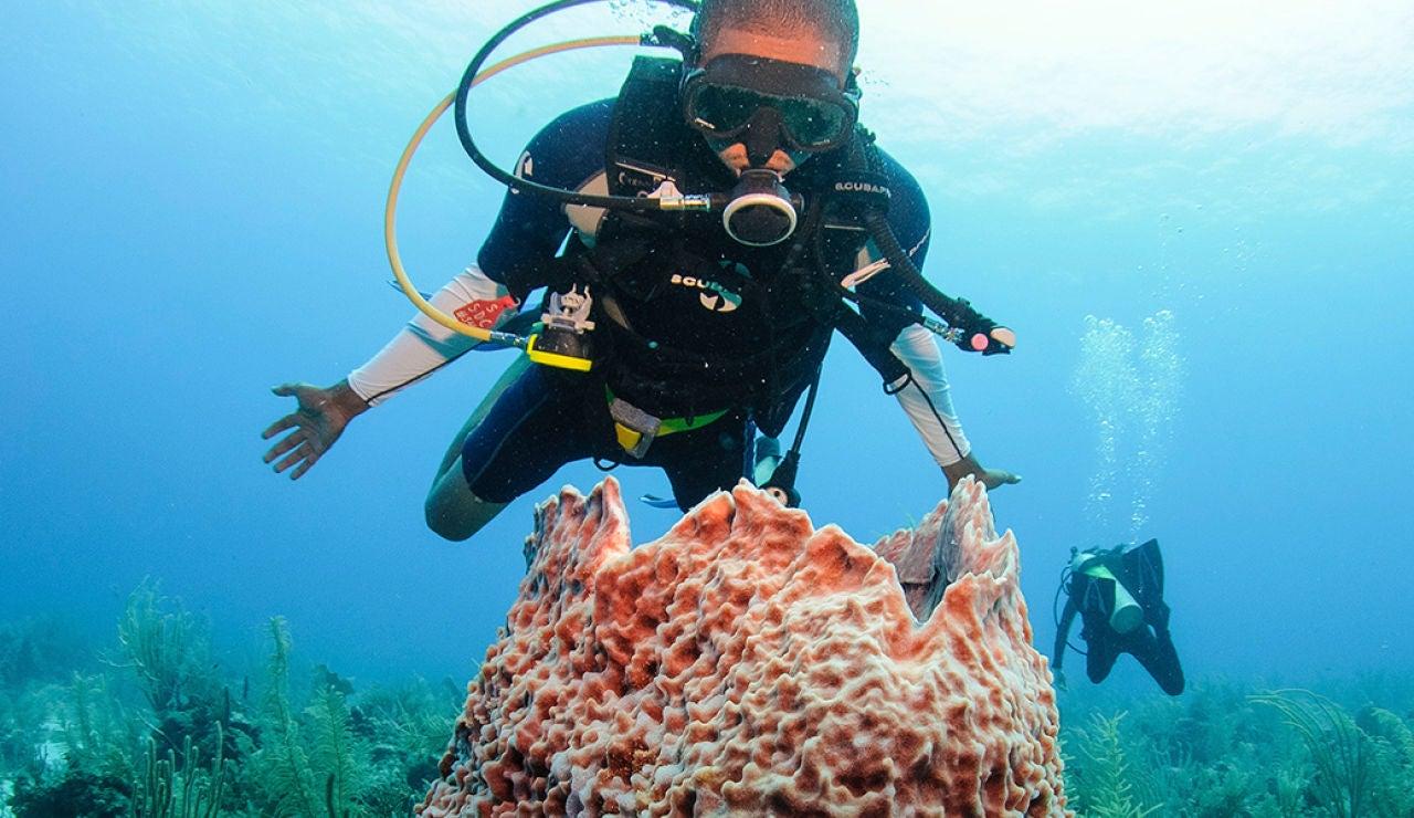 Buceando en la barrera de coral de Belice