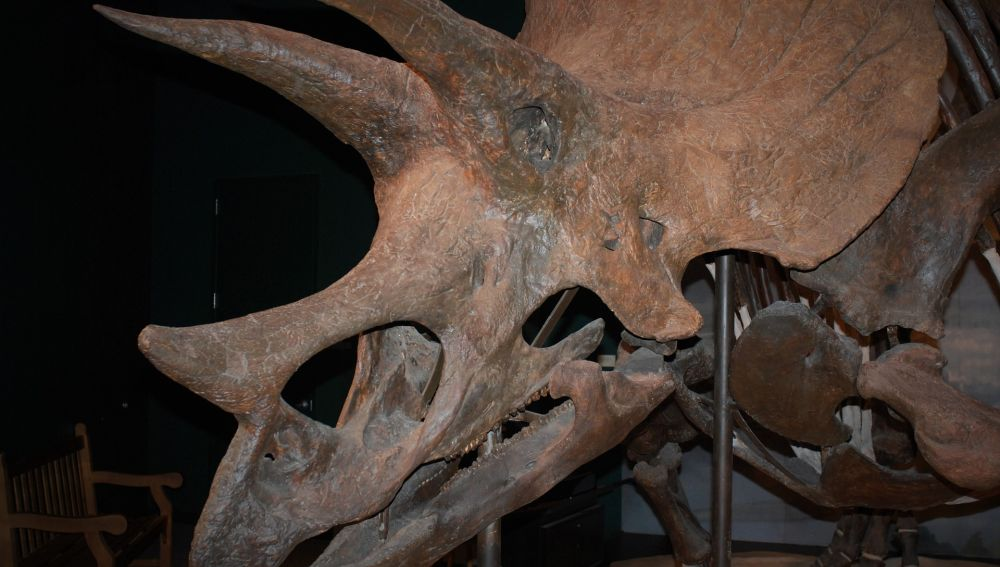 Diagnostican Por Primera Vez Un Cancer De Hueso En Un Dinosaurio 'lagartos terribles') son un grupo de saurópsidos que apareció durante el período triásico. de hueso en un dinosaurio