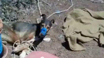 Muere un perro por asfixia tras ser atado y amordazado con cinta aislante en una finca de Teguise, en Lanzarote
