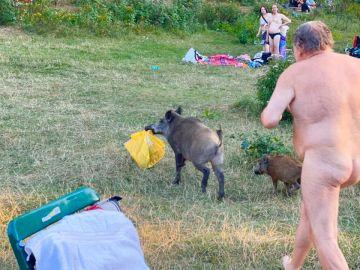 Un hombre presigue a un jabalí desnudo