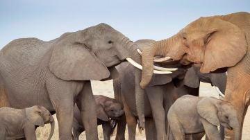 Varios elefantes en una reserva natural