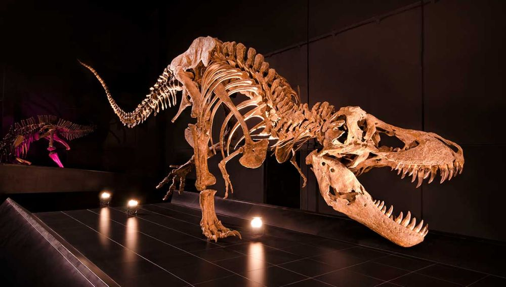 Museo paleontológico, Dinópolis