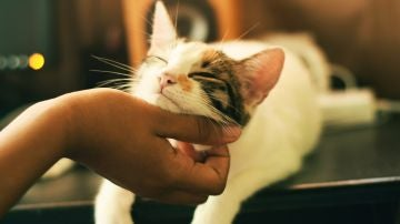 Existen cinco tipos de dueños de gatos: ¿cuál eres tú? Compruébalo aquí