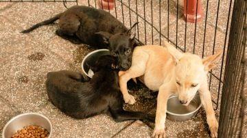 La producción de piensos para mascotas tiene una importante huella ambiental