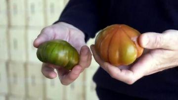 """Cuidado que te """"están engañando"""": estas son las claves para diferenciar el auténtico tomate Raf del 'falso Raf'"""