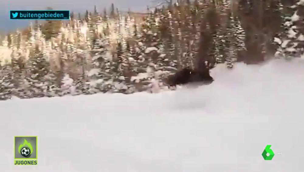 Varios esquiadores graban el momento en el que un alce les sorprende pasando a toda velocidad