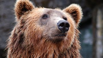 Demuestran los habitos canibales de los osos de las cavernas