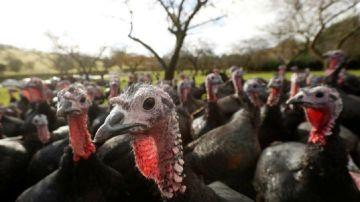 Imagen de archivo de un grupo de pavos en una granja de Reino Unido