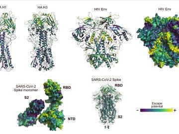 Algoritmos para estudiar el lenguaje ayudan a predecir mutaciones del coronavirus