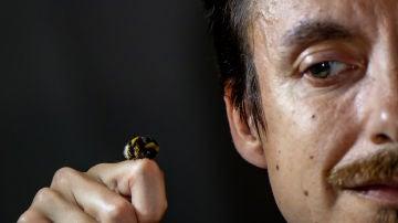 Las abejas tambien desaparecen de los registros